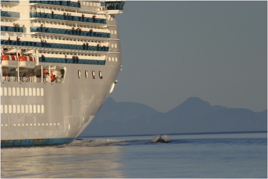 cruise ship and killer whale
